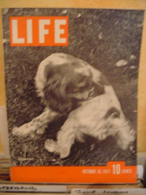 LIFE MAGAZINE - OCTOBER 25 1937 - HUNTING SPANIEL